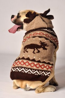Moosey Hoodie Dog Sweater by Chilly Dog